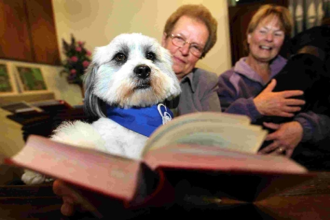 Church service blesses animals great and small