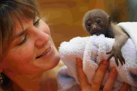 Monkey World director Dr Alison Cronin to give evidence to MPs on new primate care legislation