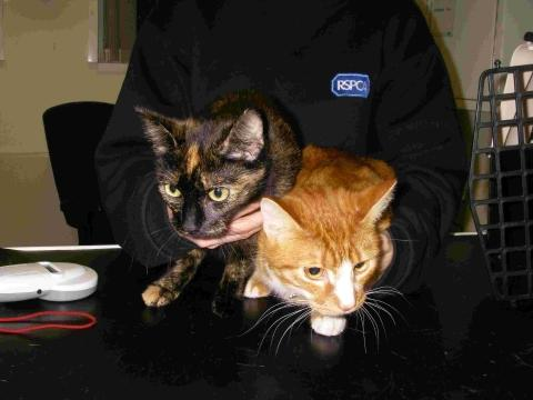 RSPCA inspector hits out after cats dumped in car park