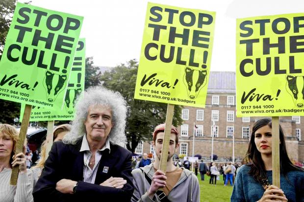 Brian May to unveil Dorset woodland plan