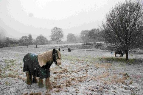 Anger over horses dumped on common