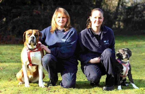 ANIMAL LOVERS: Ashley Heath RSPCA deputy manager Gaynor Cannings, left,  with Shelby  and Lizzie  Redford  with Sasha