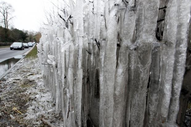 "Incredible pictures of Dorset's ""icicle hedge"""