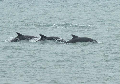 Dolphins spotted at Portland Bill by Martin Cade