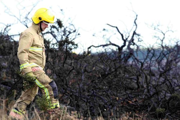 Stoborough Heath will take eight years to recover from blaze