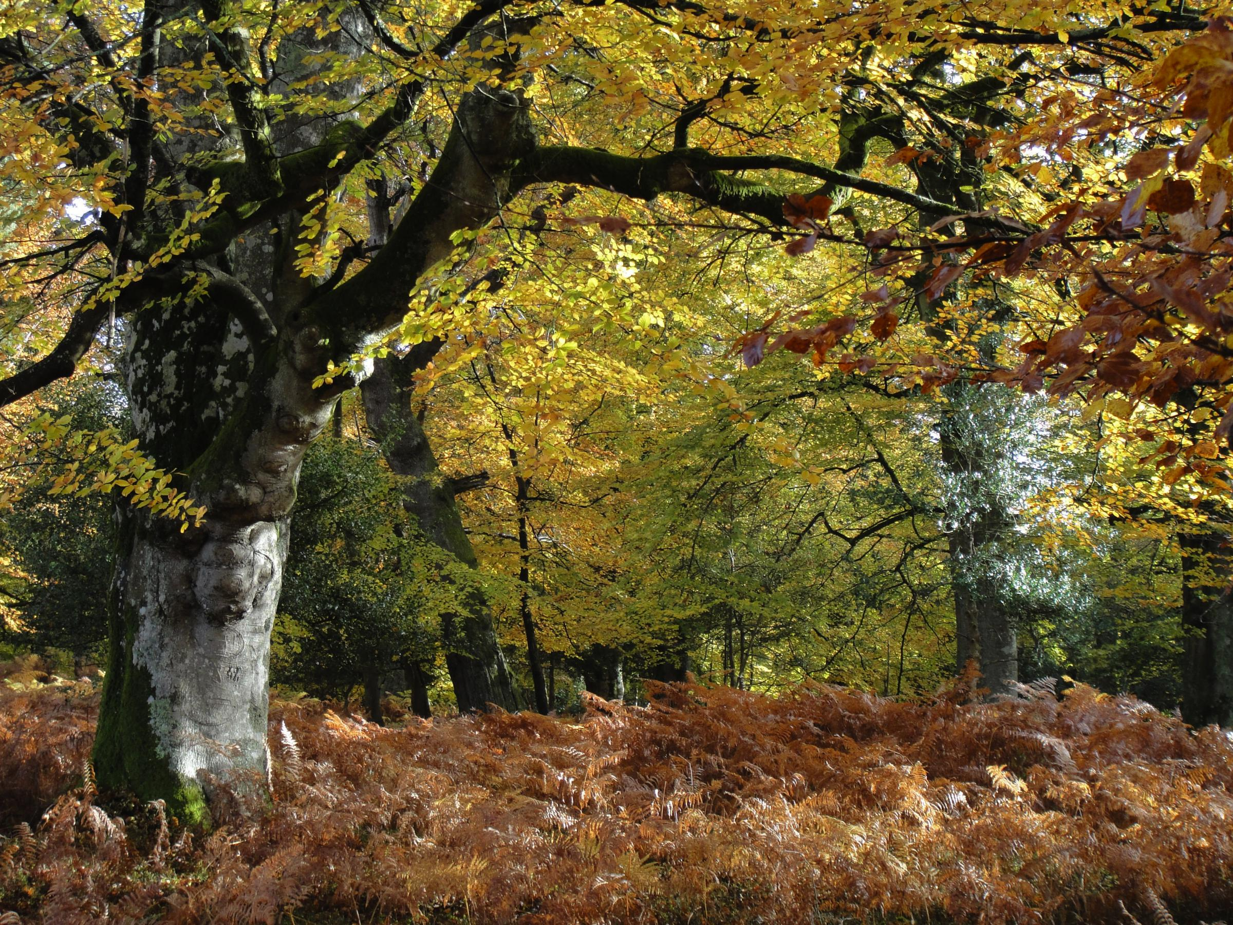 Search is on for National Park's New Forest champions