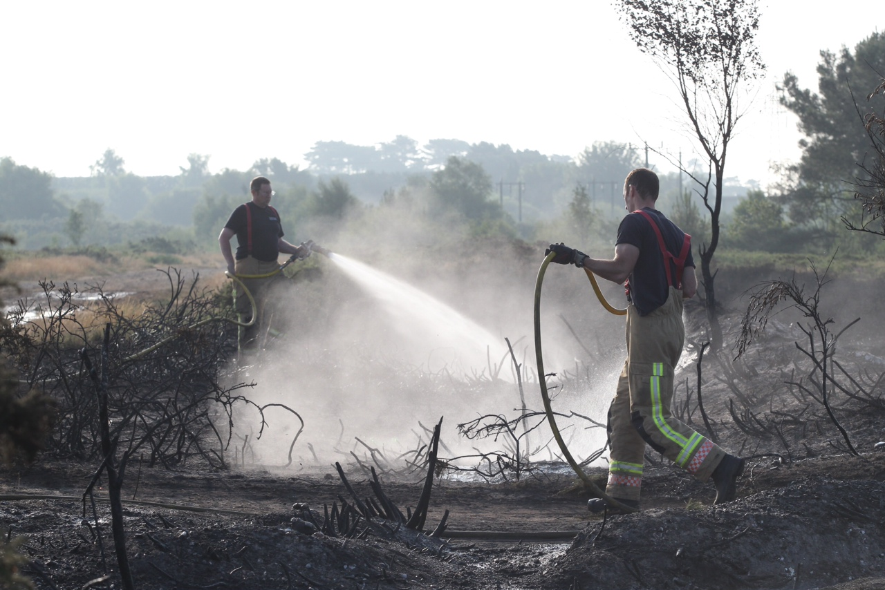 Canford Heath fire: scorched earth reveals devastating effects of blaze