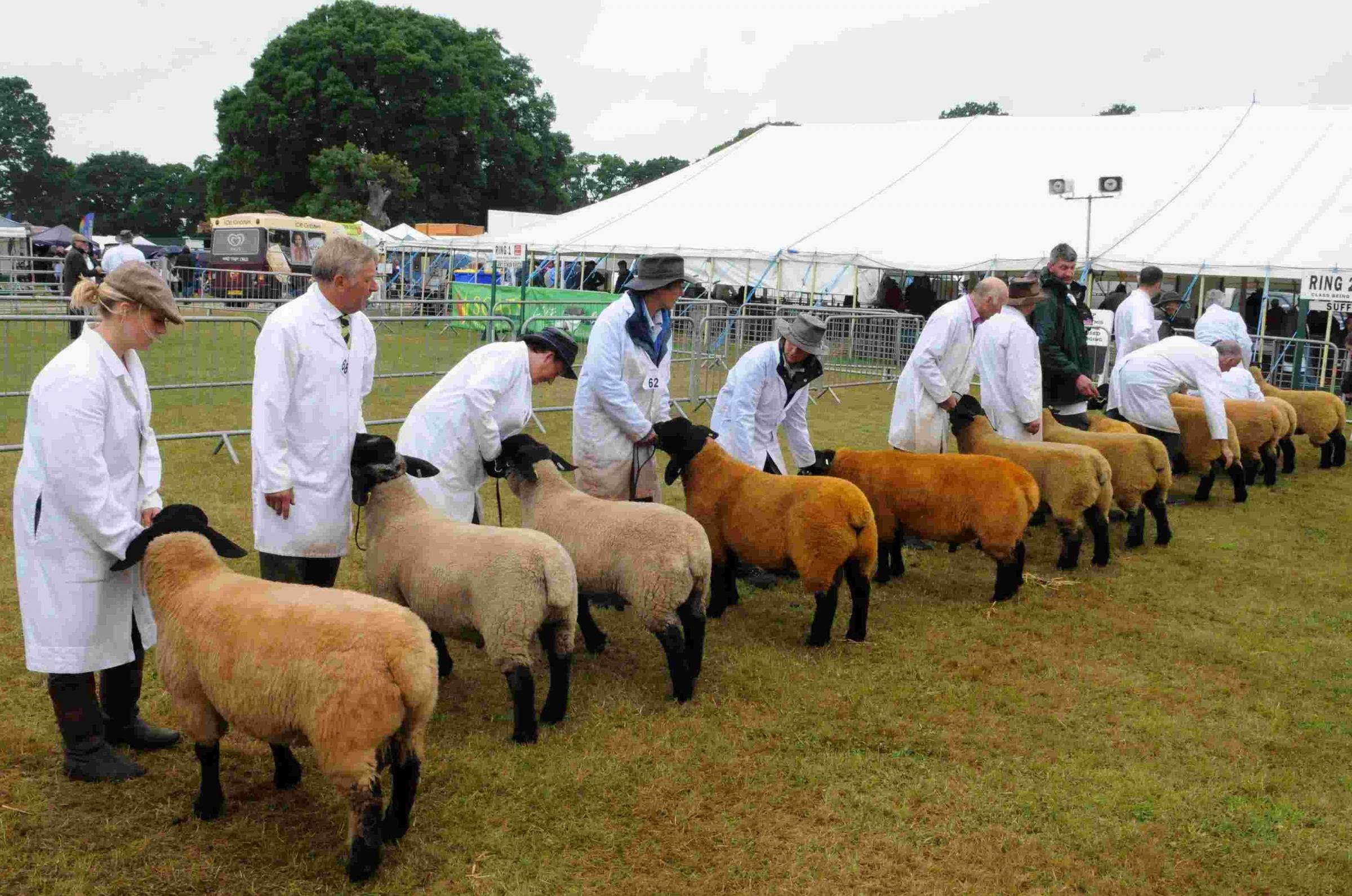 10 things not to be missed at the New Forest Show