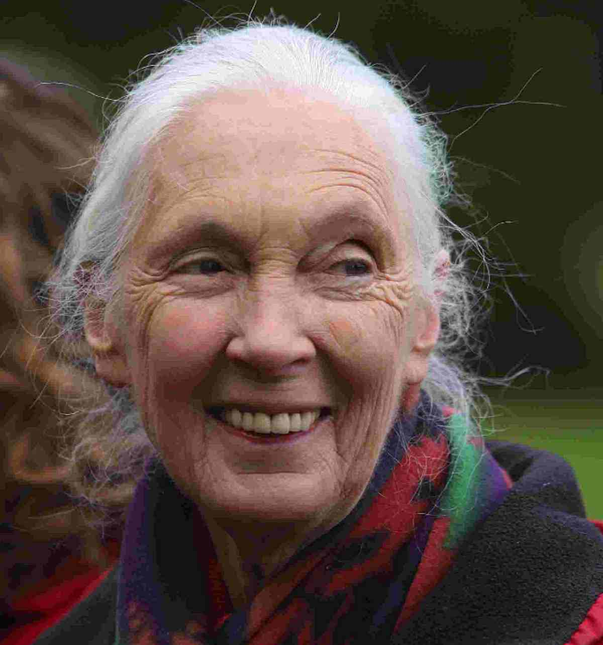 Bournemouth Echo: 'MASSIVE SUFFERING': Jane Goodall