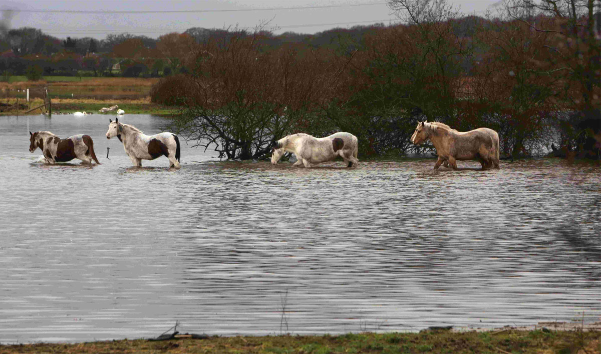 Seven horses rescued from flooded field in Christchurch