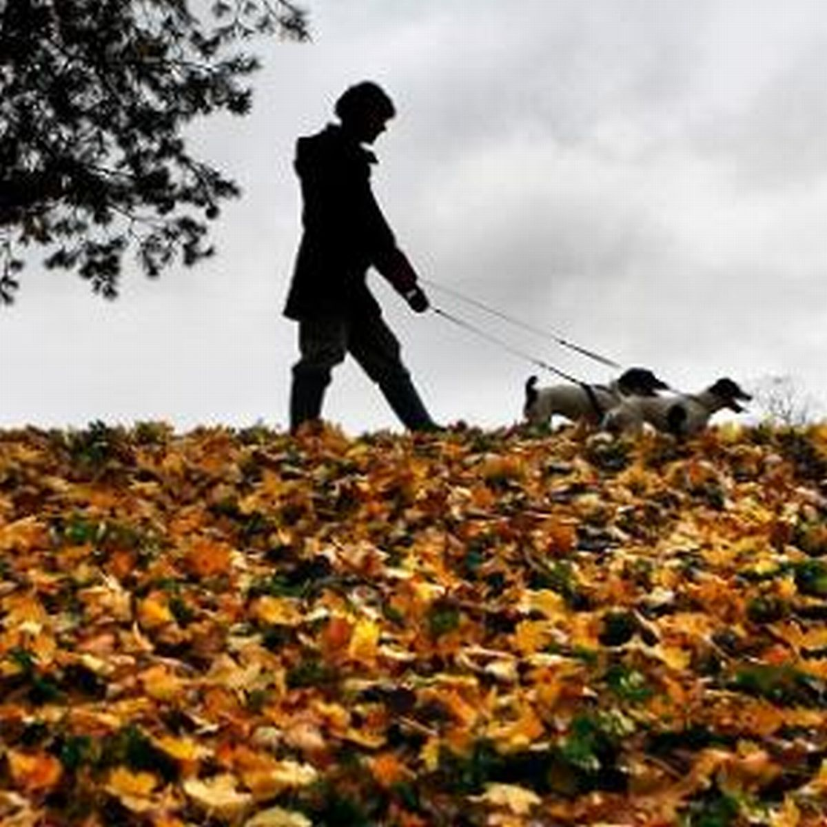 Dog walkers warned over deadly Alabama rot in the New Forest