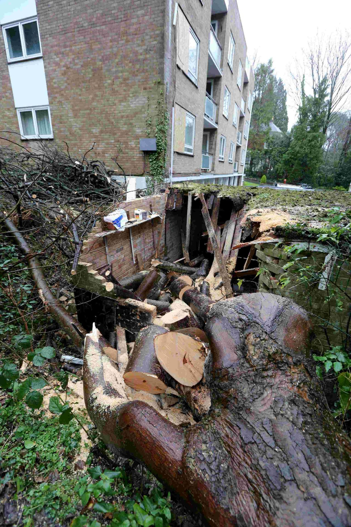 'I could have been killed' – lucky escape for residents as 120ft tree crashes through windows at flats