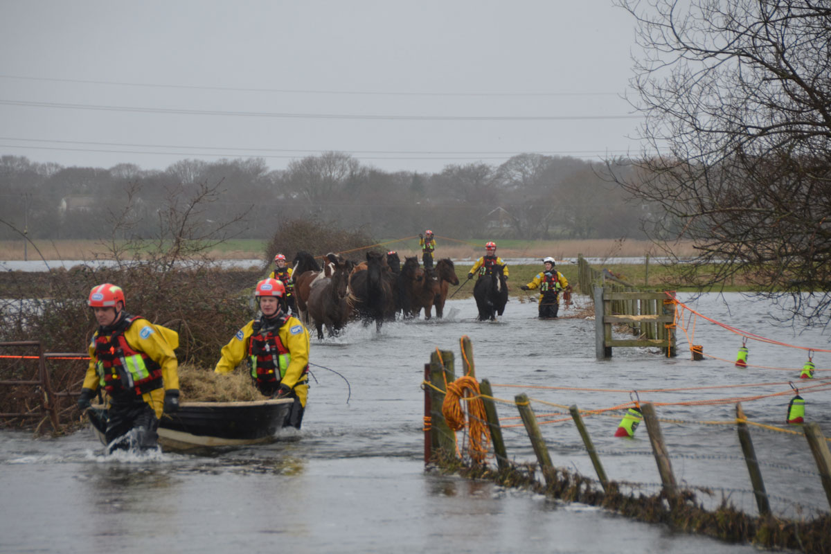 18 horses rescued from flooded area in Christchurch