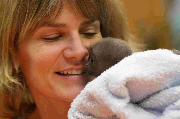 Bournemouth Echo: RESCUE: Dr Alison Cronin with Bueno Junior, a baby Woolly Monkey  born and hand reared at Monkey World