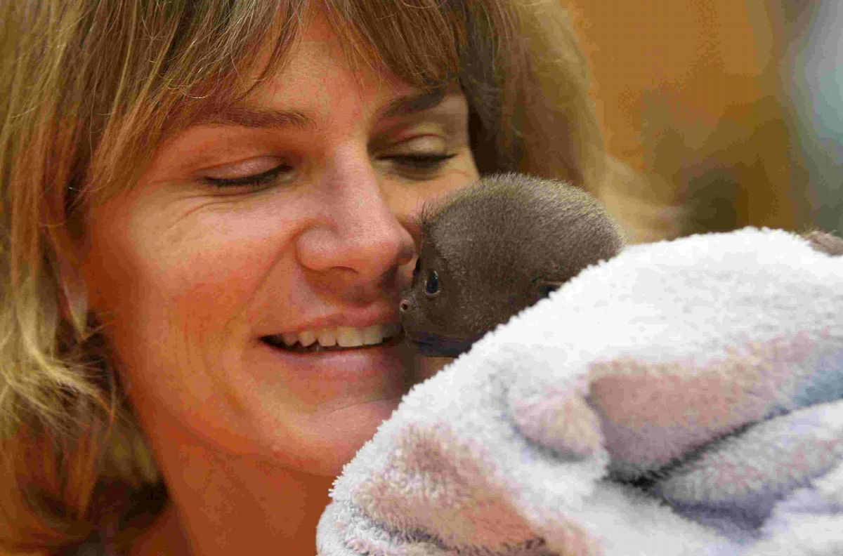 RESCUE: Dr Alison Cronin with Bueno Junior, a baby Woolly Monkey  born and hand reared at Monkey World