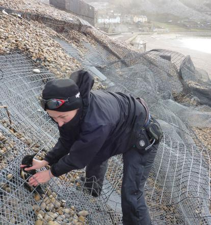 Angela Thomas, assistant warden at the Chesil Bank and Fleet Nature Reserve, rescues a trapped razorbill