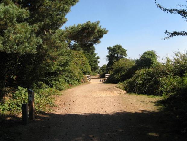 Bournemouth Echo: Castleman's Corkscrew: a walk along an old New Forest railway line near Brockenhurst