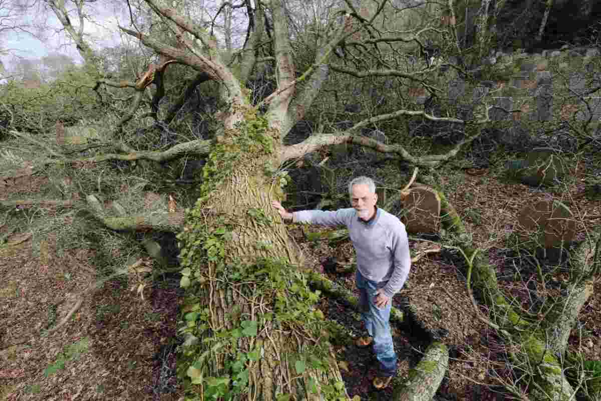 CRASHED: Philip Buxton with the tree and, inset, a branch on headstones