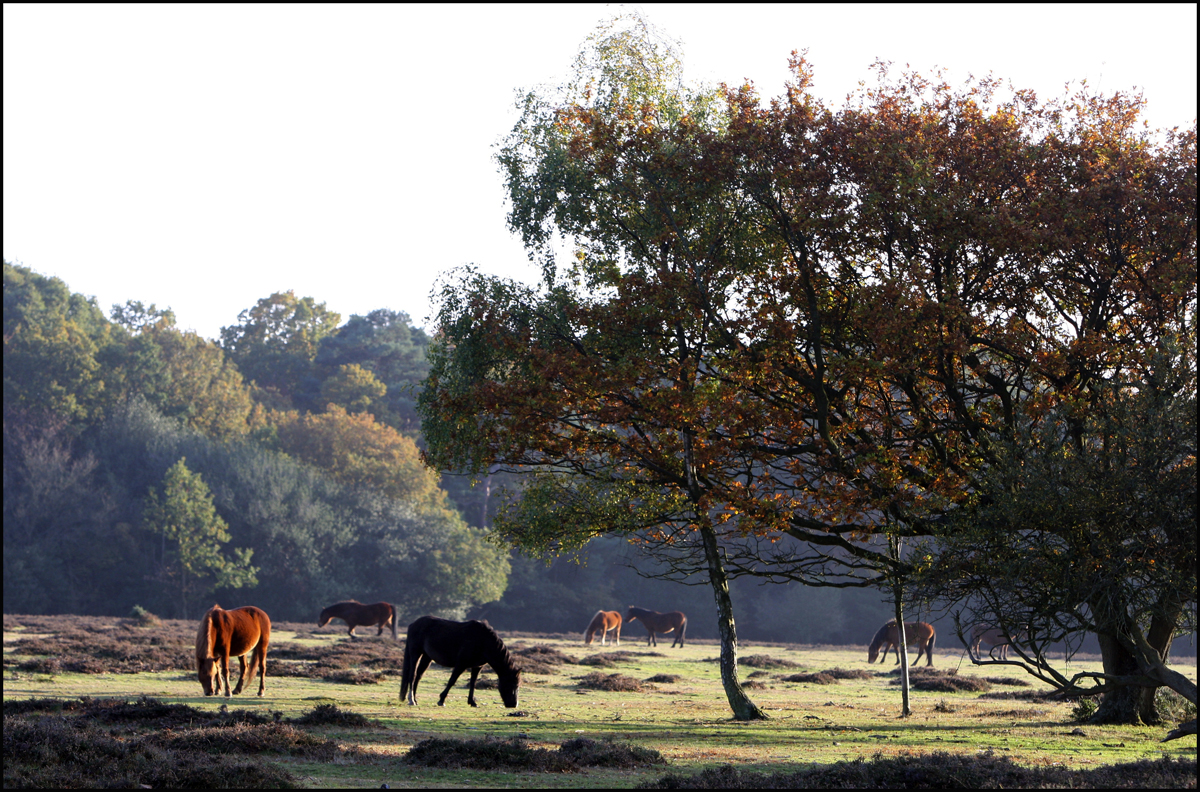 Delight as barn conversion proposals are scrapped after protest from the New Forest