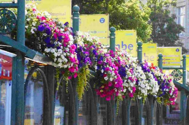 COLOURFUL: Flower pedestals in the Square