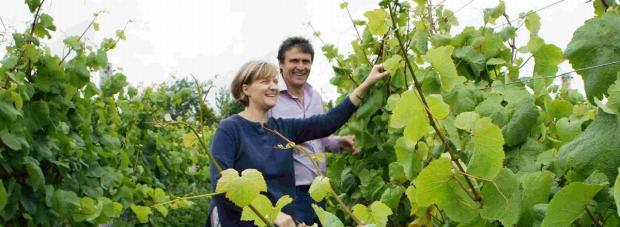 Dorset-based winery Furleigh Estate introduces wine to airport shops