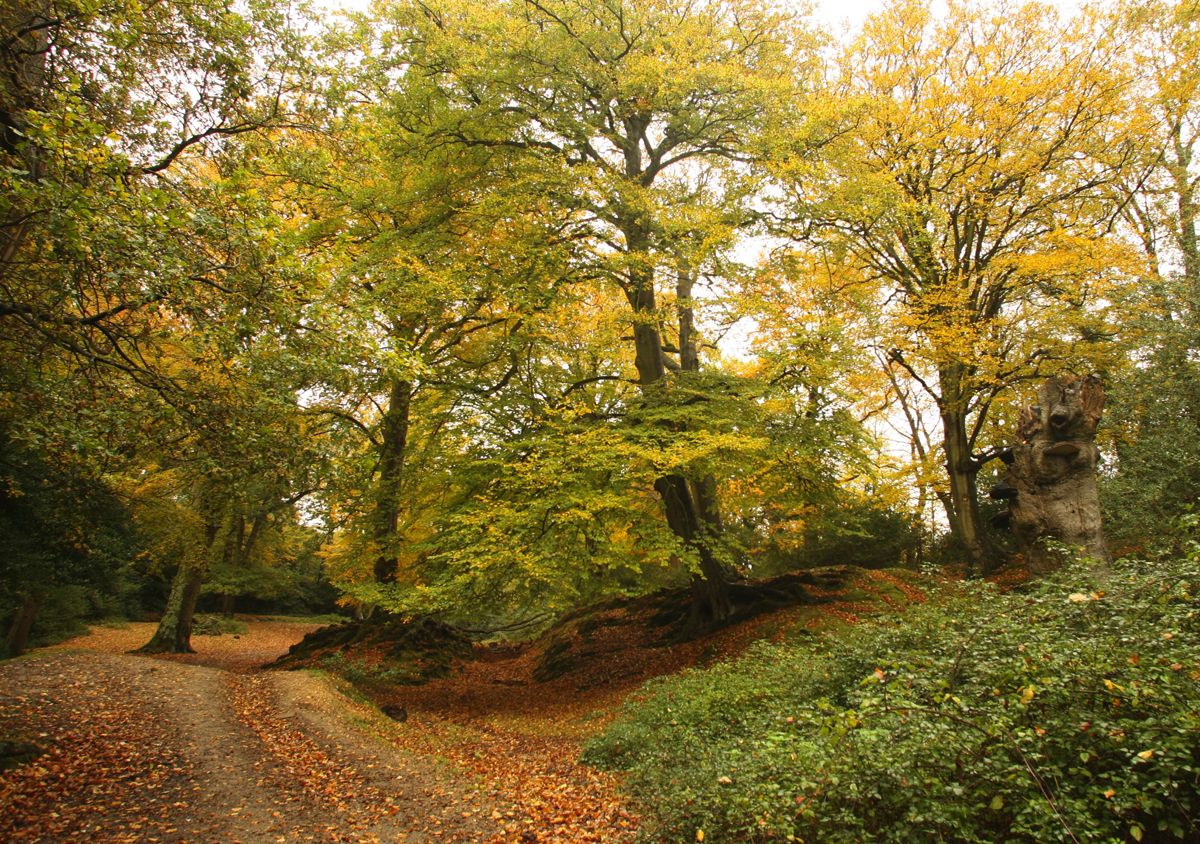 Become a volunteer and explore parts of the New Forest you never knew existed...