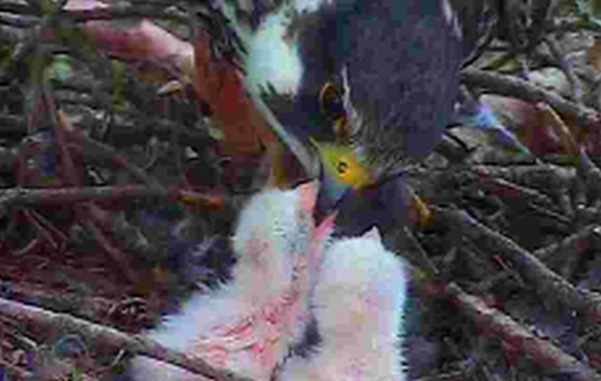 Cutting-edge 'raptorcam' captures birds of prey behaviour