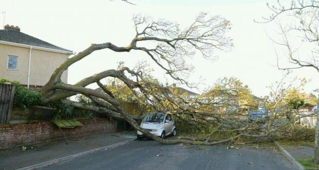 Bournemouth Echo: Tree crashes down onto Smart car
