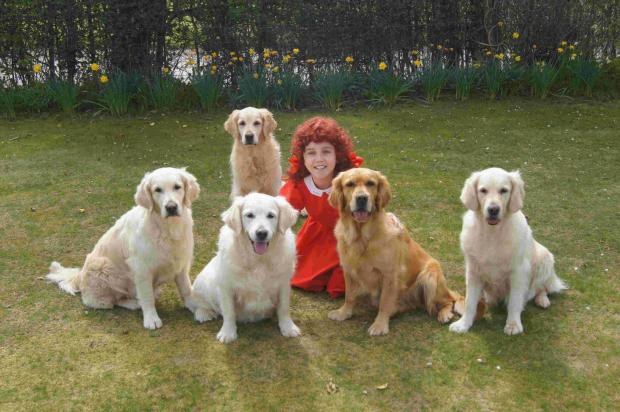 Bournemouth Echo: NOT SO DUMB DOGS: Lucy-May Alner, 13, with the five competing golden retrievers