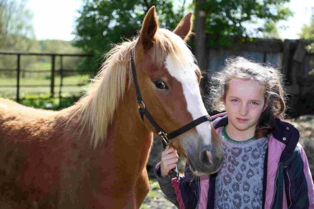Bournemouth Echo: LEFT FOR DEAD: Izzy Spillane, 10, with her foal Havana who is recovering after being attacked in its field near Throop