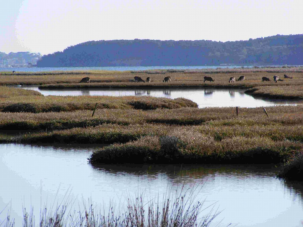 TRANQUIL: Beautiful Arne's RSPB Nature Reserve