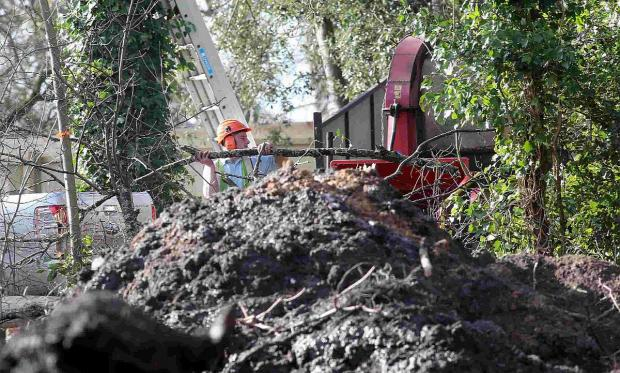 CONTROVERSY: A workman cutting down trees in Druitt Gardens