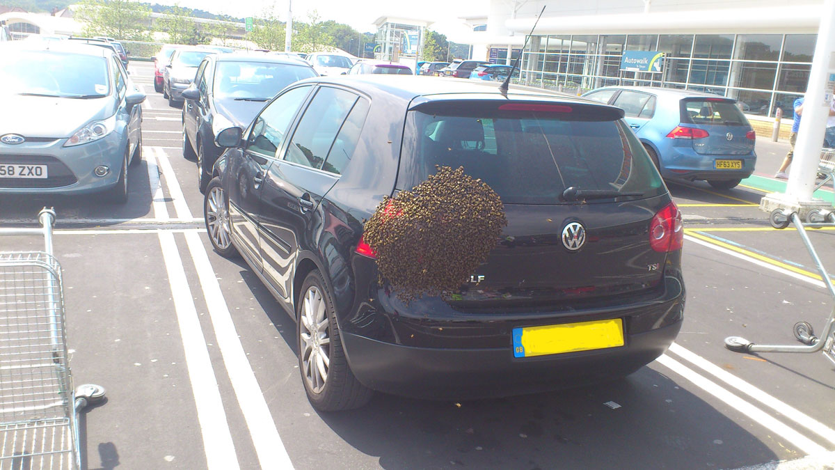 Bees swarm onto car at Castlepoint shopping centre