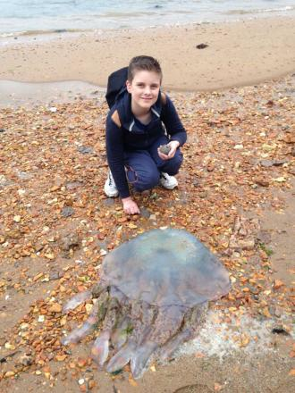 Youngster finds giant barrel jellyfish washed up at Brownsea Island