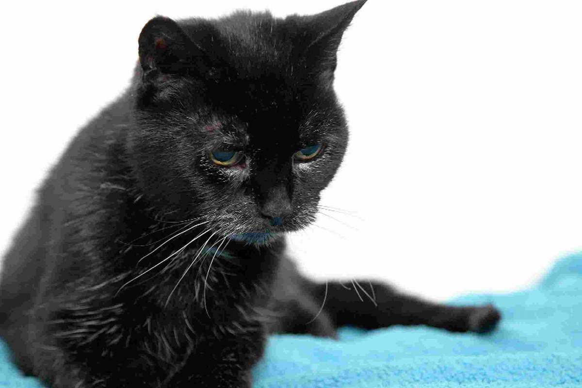 VIDEO: Move over, Poppy – I'm the world's oldest cat