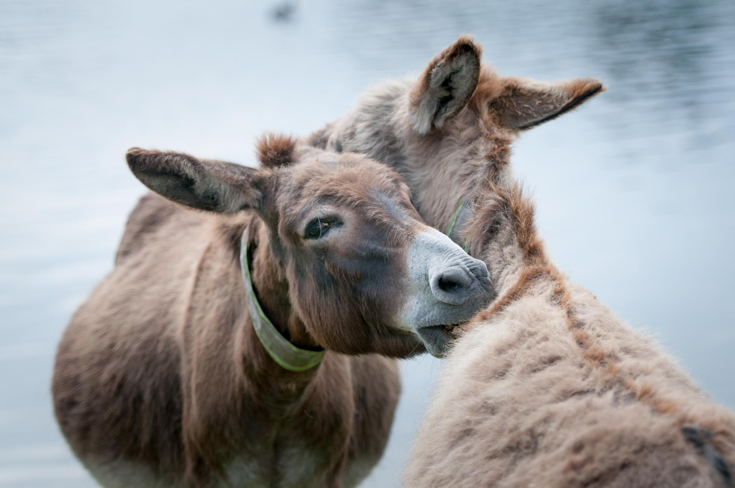 Donkeys in new attack at New Forest beauty spot