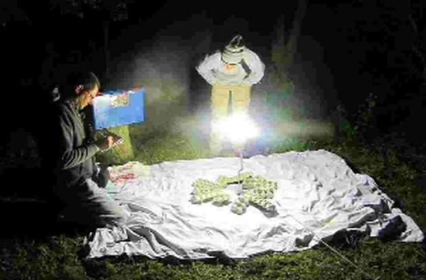 STUDY: Moths are trapped for recording by volunteers