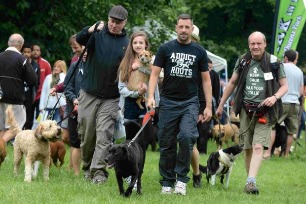 Bournemouth Echo: Waggy tails at fun dog show