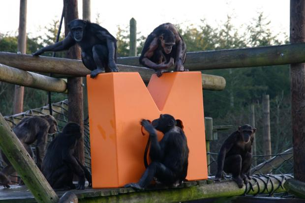 TV company wants to raise £197,000 to save axed Monkey World TV show