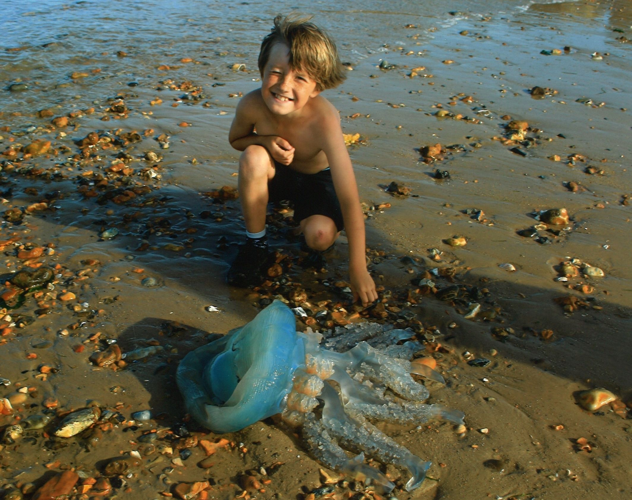 WOBBLING: Shannon Knott, eight, with a 'blue barrel' jellyfish on Mudeford beach