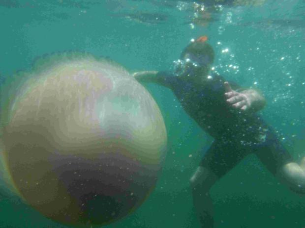 Snorkeller Martin Frith with a barrel jellyfish