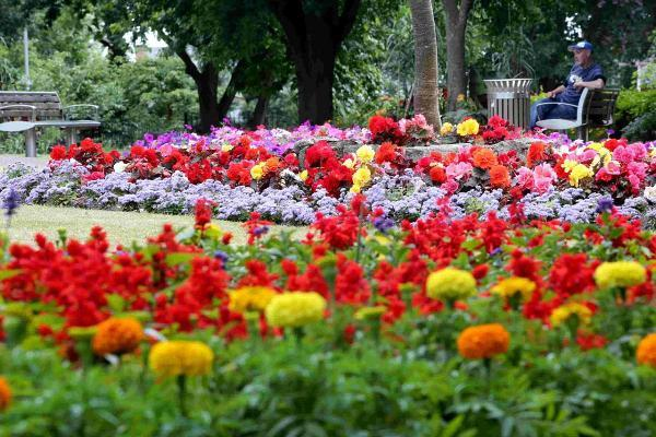 Bournemouth Echo: RESOURCES: New Zealand Gardens in Christchurch