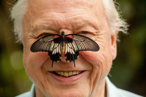 Why Sir David Attenborough wants you to join in the Big Butterfly Count