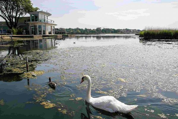 TRANQUIL: Birds at Poole Park
