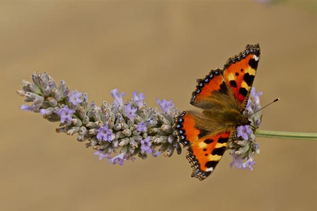 Picture: Butterfly Conservation