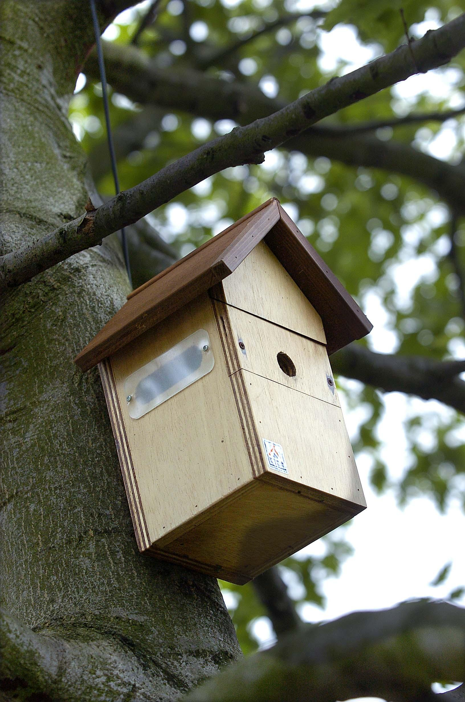 how to clean bird boxes 3