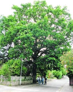 Tree's a jolly good feller, say residents | Bournemouth Echo