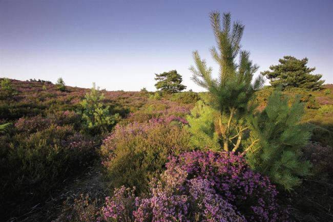 Photo of Arne RSPB reserve (Photo: RSPB Images)