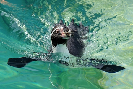 Oceanarium's new penguin enclosure to open Tuesday after delay