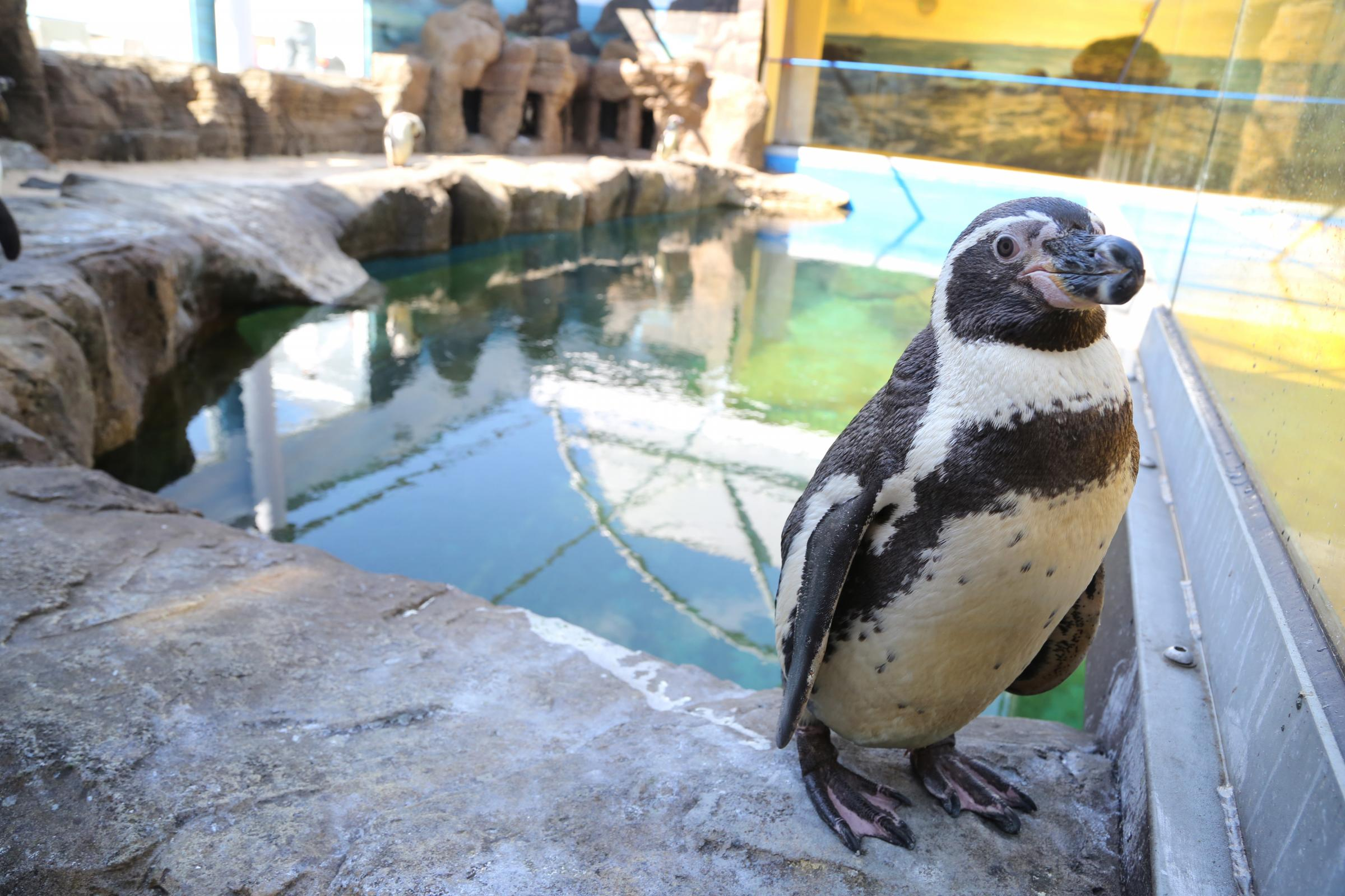 Wiinterrr 39 S Day Visitors Take Their First Look At The Penguins In Bournemouth